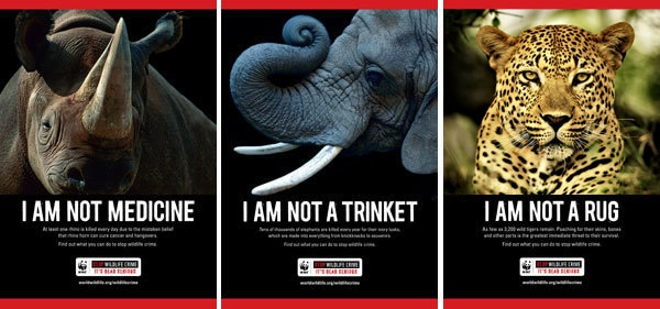 animal poaching campaigns sustainable travel