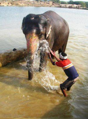 animal volunteer work