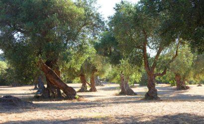make organic olive oil retreat